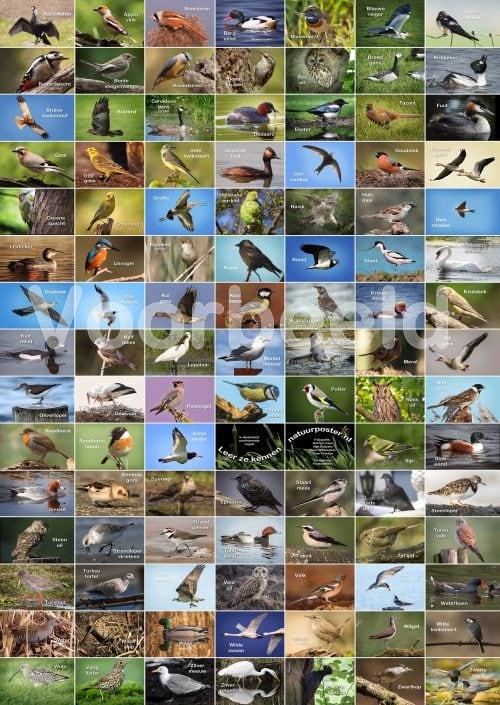 Vogelposter met meer dan 100 in Nederland voorkomende vogels