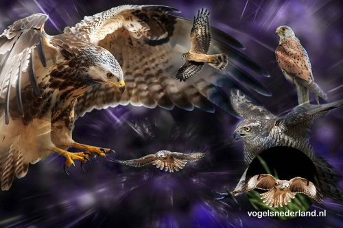 Design vogelfotocollage