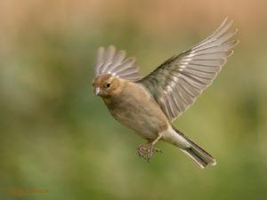 Vogels van dit jaar